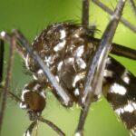 virus zika brasil